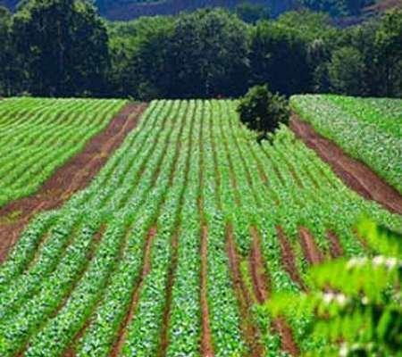 تنها 11 درصد زمین های کشاورزی کردستان آبی است