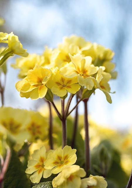 گیاهان زمستانی زیبا که در فصل سرما هم گل می دهند!