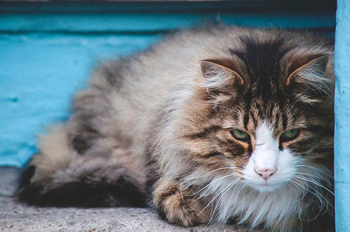 گالری عکس گربه پشمالو؛ زیبا و ملوس برای پروفایل
