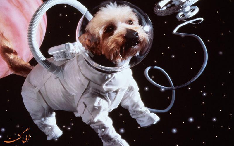 همه این حیوانات به ماه سفر نموده اند!