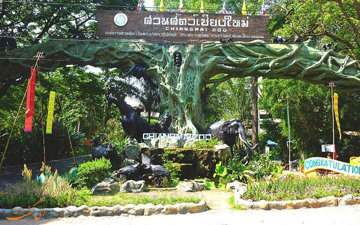 باغ وحش چیانگ مای، تماشای پنگوئن و پاندا در تایلند!