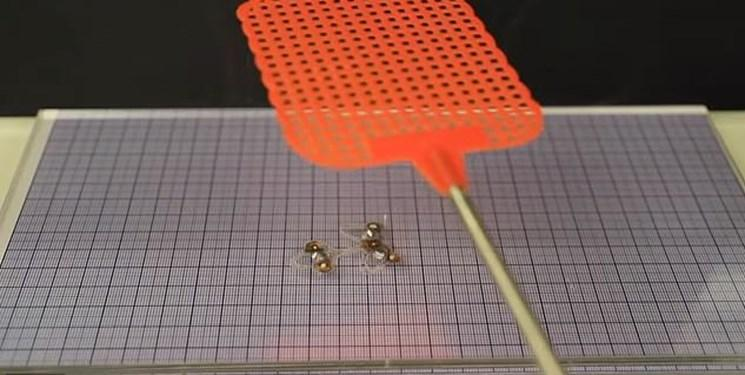 حشره رباتیک ساخته شد