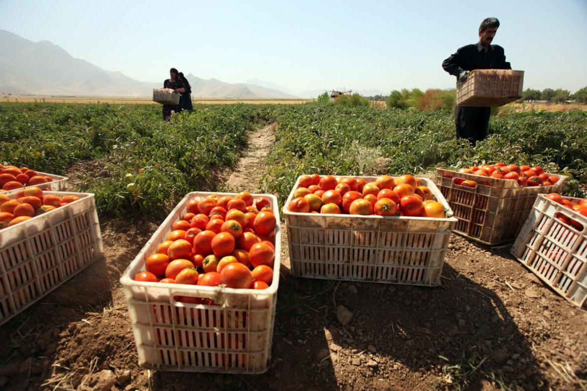 خبرنگاران کشاورزی می تواند موتور توسعه خوزستان را گرم تر کند