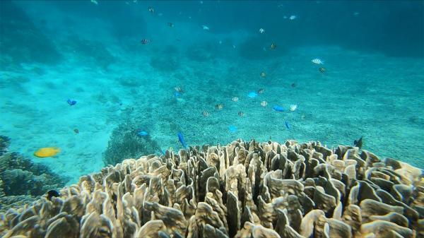 جزیره ایشی گاکی و افسون آب سنگ های مرجانی کبود