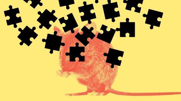 مغز انسان؛ جعبه سیاهی که هر روز مرموزتر می شود